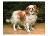 King Charles Spaniel, 1907 Giclee Print by George Sheridan Knowles
