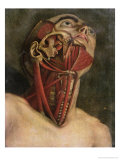 Cross-Section of the Right Hand Side of the Neck and Face, circa 1745 Giclee Print by Jacques Fabien Gautier d'Agoty