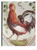 Detail of a Cockerel, Late 18th Century Giclee Print by Pietro Rotati