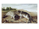 Two Young Seals on the Shore, circa 1650 Giclée-Druck von Paul De Vos