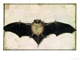 Bat, 1522 Giclee Print by Albrecht D&#252;rer