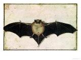 Bat, 1522 Giclee Print by Albrecht Dürer