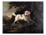Study of Clumber Spaniel in Wooded River Landscape Giclee Print by Edward Cooper