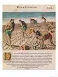 "Florida Indians Planting Maize, from ""Brevis Narratio..."", Published by Theodore de Bry, 1591 Giclee Print by Theodor de Bry"