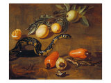 Still Life of Fruits from Surinam and Reptiles Giclée-Druck von Dirk Valkenburg