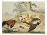 Cocks Fighting Giclee Print by Melchior de Hondecoeter