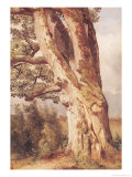 The Oak Giclee Print by Alexandre Calame