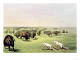 Hunting Buffalo Camouflaged with Wolf Skins, circa 1832 Giclee Print by George Catlin
