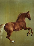 Paard Whistlejacket, 1762 Gicléedruk van George Stubbs