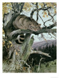 Wildcat in a Tree, 1902 Giclee Print by Wilhelm Kuhnert