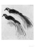 Birds Giclee Print by  Rembrandt van Rijn