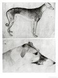 Greyhound and Head of a Greyhound Giclée-tryk af Antonio Pisani Pisanello