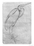 Pelikan Giclée-tryk af Antonio Pisani Pisanello