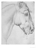 Head of a Horse Giclee Print by Antonio Pisani Pisanello