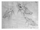Two Heads of Stags, One Head of a Doe Giclée-tryk af Antonio Pisani Pisanello