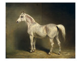 Beatrice, the White Arab Saddlehorse of Helmuth Graf Von Moltke, 1855 Giclee Print by Carl Constantin Steffeck