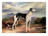 A Greyhound in a Hilly Landscape Giclee Print by James Beard