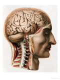 "The Brain, Plate from ""Traite Complet de L'Anatomie de L'Homme""  1866-67 Giclee Print by Nicolas Henri Jacob"