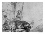 The Sow, 1643 Giclee Print by  Rembrandt van Rijn