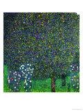 Roses Under the Trees, circa 1905 Giclee-trykk av Gustav Klimt