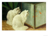 White Cats Watching Goldfish Giclee Print by Arthur Heyer