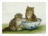 Kitten in a Blue China Bowl Giclee Print by Betsy Bamber