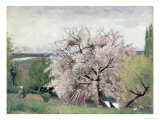 Fruit Tree in Blossom, Bois-Le-Roi Giclee Print by Carl Fredrik Hill