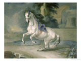 "The White Stallion ""Leal"" En Levade, 1721 Giclee Print by Johann Georg de Hamilton"