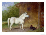 A Shetland Pony and a King Charles Spaniel Giclee Print by Martin Theodore Ward