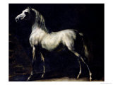 Study of a Dapple Grey Giclee Print by Th&#233;odore G&#233;ricault