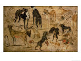 Study of Hounds, 1616 Giclee Print by Jan Brueghel the Elder