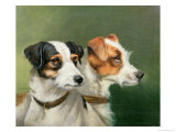 Two Fox Terriers, 1898 Giclee Print by Alfred Wheeler