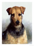 Wire Fox Terrier, 1933 Giclee Print by Lilian Cheviot