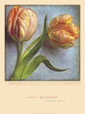 Parrot Tulips II Posters by Sally Wetherby