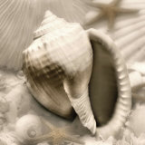 Iridescent Seashell III Prints by Donna Geissler