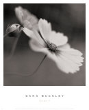 Cosmos I Prints by Dana Buckley