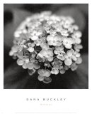Hydrangea Prints by Dana Buckley
