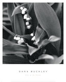 Dana Buckley - Müge Çiçeği - Sanat