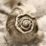 Iridescent Seashell IV Poster af Donna Geissler