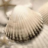Iridescent Seashell II Posters af Donna Geissler