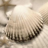 Iridescent Seashell II Posters by Donna Geissler