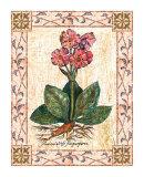 Pink Primrose Poster by Walter Robertson
