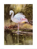 Flamingo Posters by Nancy Azneer