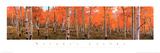 Nature&#39;s Colors, Autumn Trees Prints by Kathleen Norris Cook