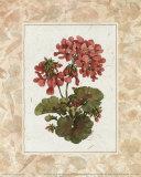 Blume des Tages – Geranie Kunstdruck von Jerianne Van Dijk