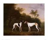 Two Greyhounds in a Landscape Posters by John Boultbee
