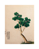 Flowering Chinese Tree II Posters