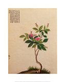 Flowering Chinese Tree I Print