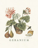 Geraniums Prints by Victoria Morland