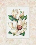 Fleur du Jour, Magnolia Posters by Jerianne Van Dijk